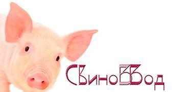 Порода свиней мангалы: характеристика, разведение и отзывы