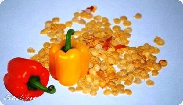 Лучшие способы подготовки семян перца к посеву на рассаду: всегда с крепкой рассадой и хорошим урожаем!