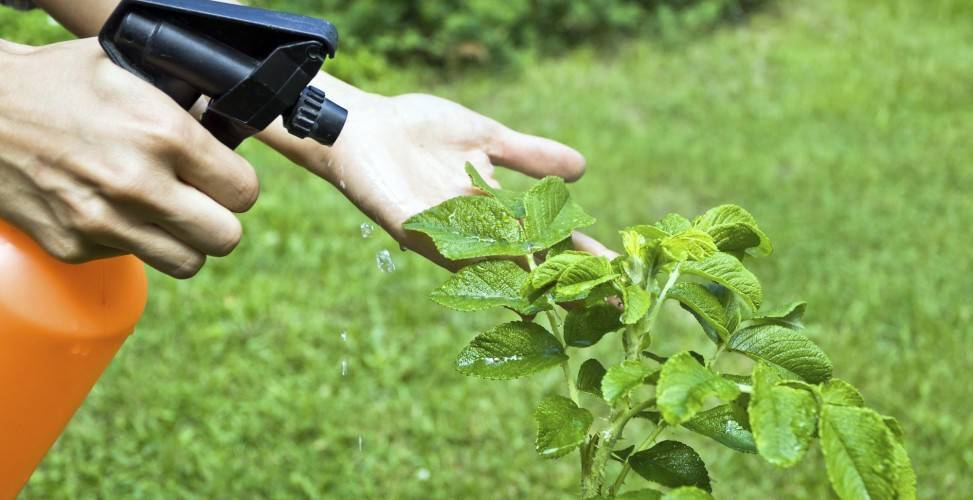 Фунгициды для огурцов в теплице: виды и инструкция по применению