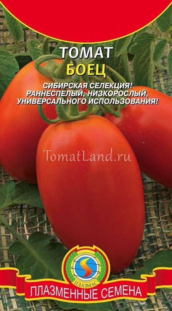 Томат боец (буян): описание и характеристика сорта, выращивание с фото