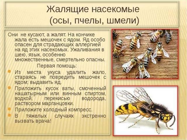 Аллергия на пчелиный яд при укусе пчелы