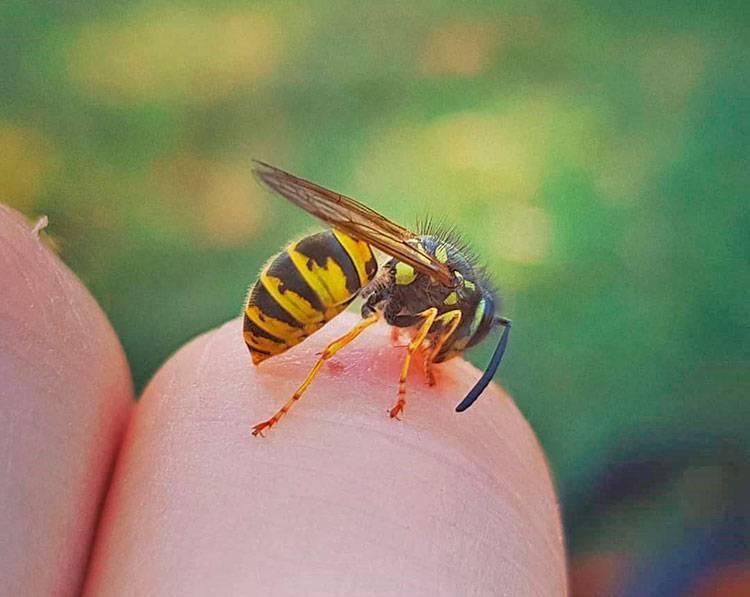 Аллергическая реакция на укус пчелы — расписываем во всех подробностях