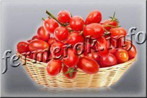 Томат дамские пальчики: характеристика и выращивание сорта