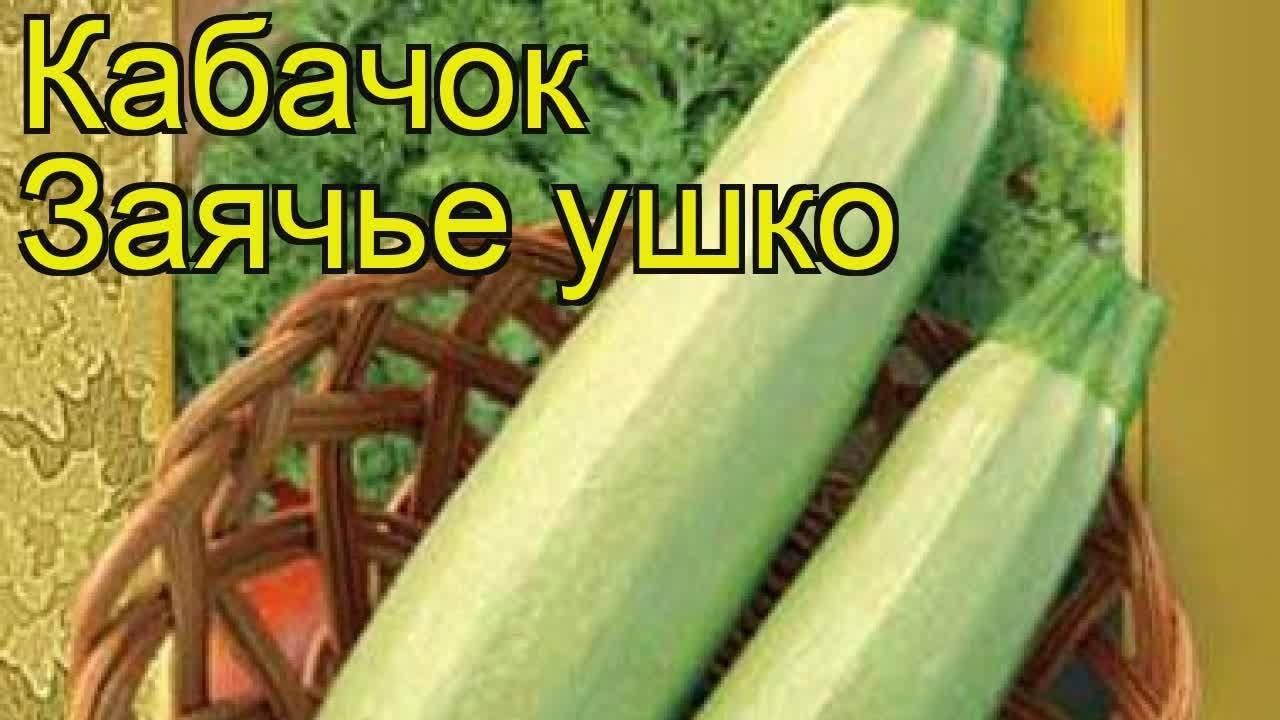 Кабачок гоблин — описание сорта, фото, отзывы, посадка и уход