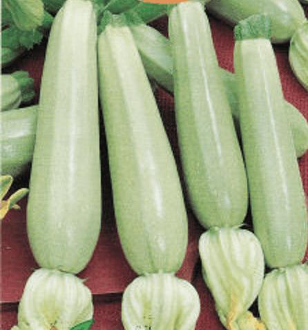 Кабачок суха f1 — характеристика, отзывы и описание сорта