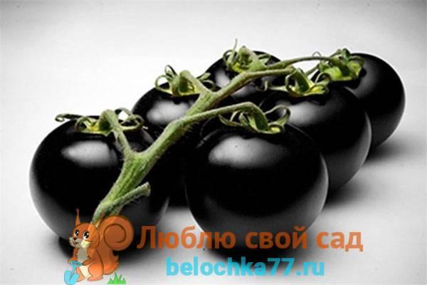 Популярный экзотический сорт из америки — томат каштановый шоколад: отзывы и описание
