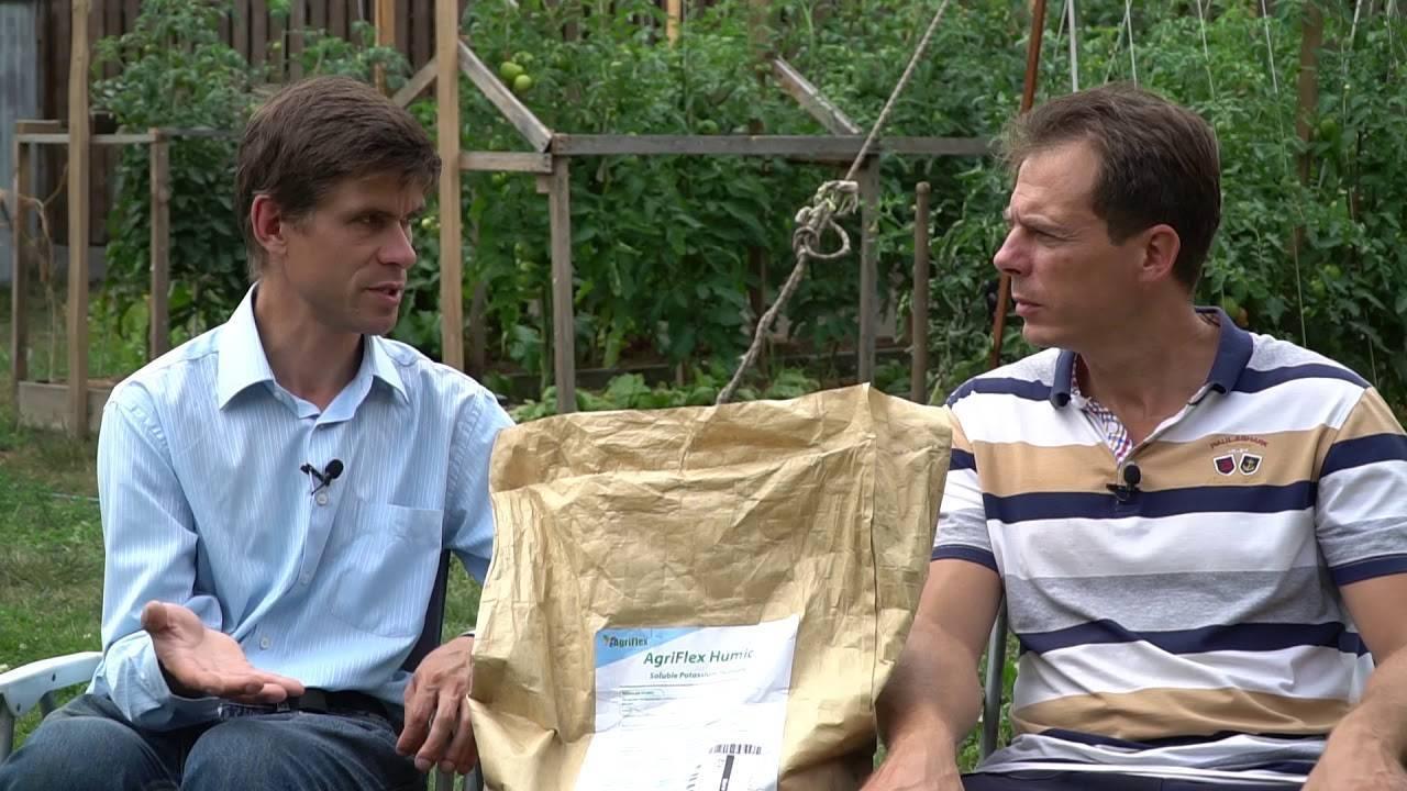 Подкормка огурцов калием: виды, сроки и особенности применения