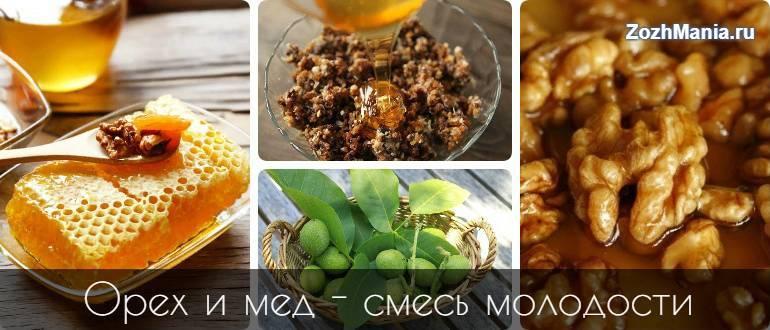 Рецепты приготовления грецких орехов с медом