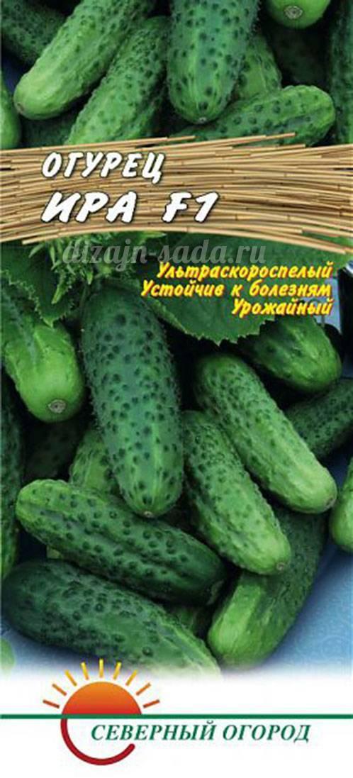 Сорт огурцов миранда f1: описание и характеристика, отзывы
