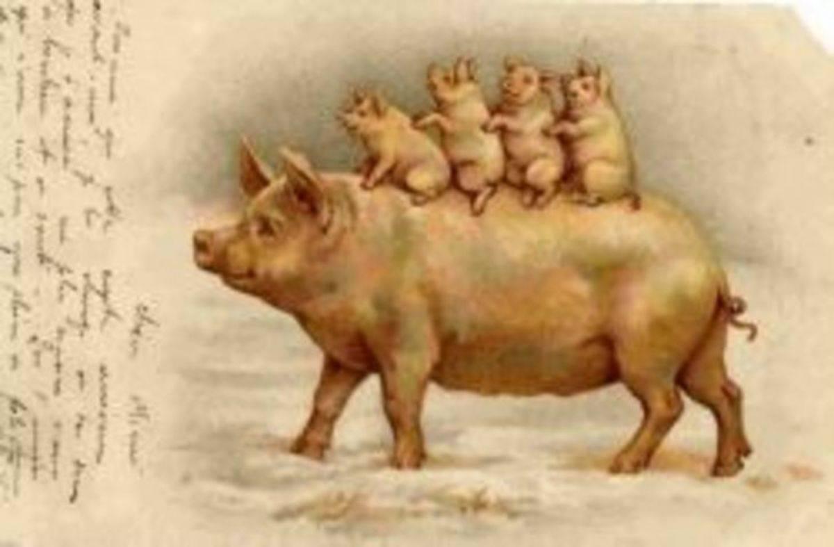 Статьи о племенном свиноводстве на piginfo   кормление лактирующих свиноматок: опыт фермера, получающего 39 отъемных поросят на свиноматку