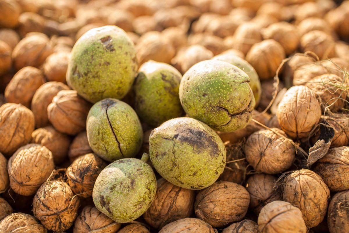 Грецкие орехи с медом для мужчин: рецепт, польза и вред, как принимать?