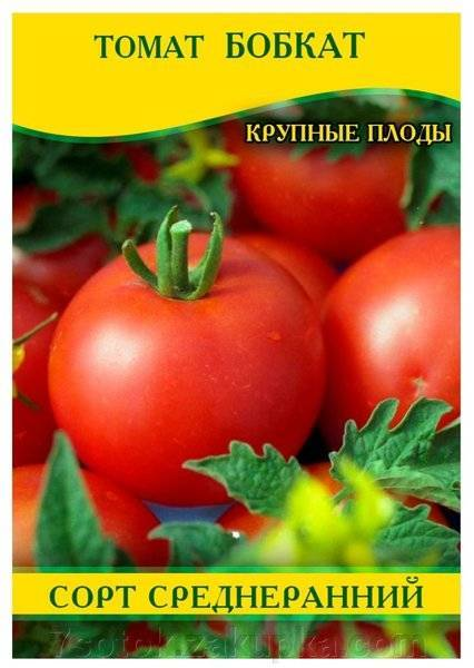 Томат бобкат: характеристики, описание сорта и хитрости выращивания
