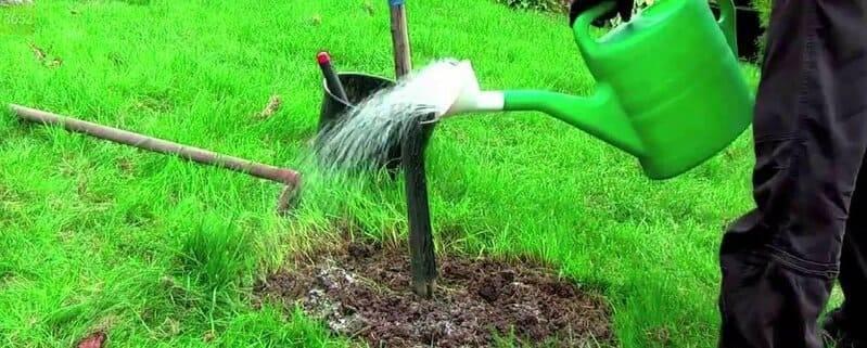 Полив садовых растений