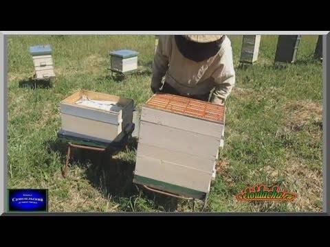 Как зимуют пчелы в пластиковых ульях
