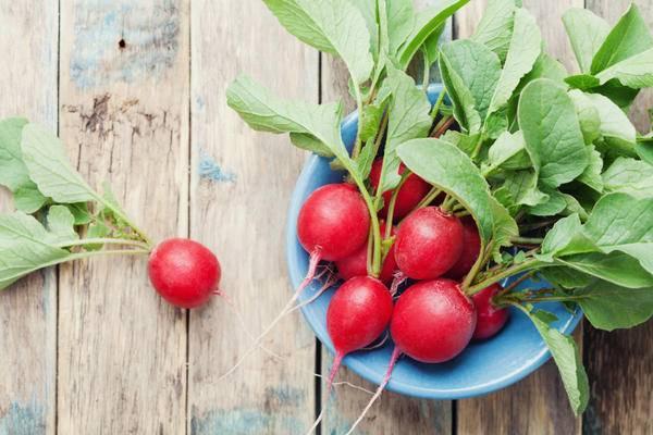 Характеристика, описание, достоинства и недостатки сорта редиса диего. как вырастить из семян?