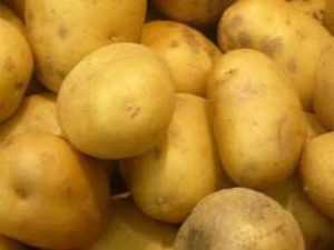 Картошка сорт тайфун