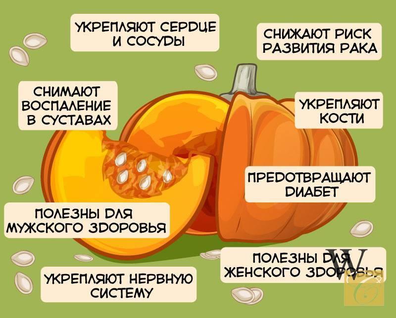 Тыква польза и вред для организма, кулинарные рецепты из тыквы