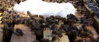 Подкормка пчел зимой