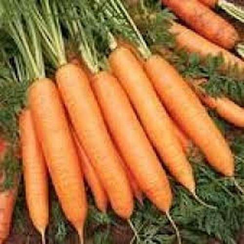 Морковь лагуна f1 — описание сорта, фото, отзывы, посадка и уход