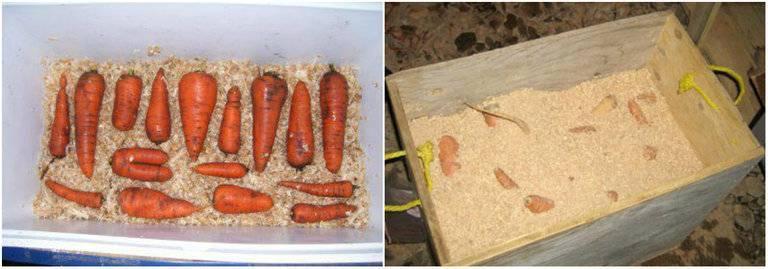 Как хранить морковь на зиму   хранение моркови