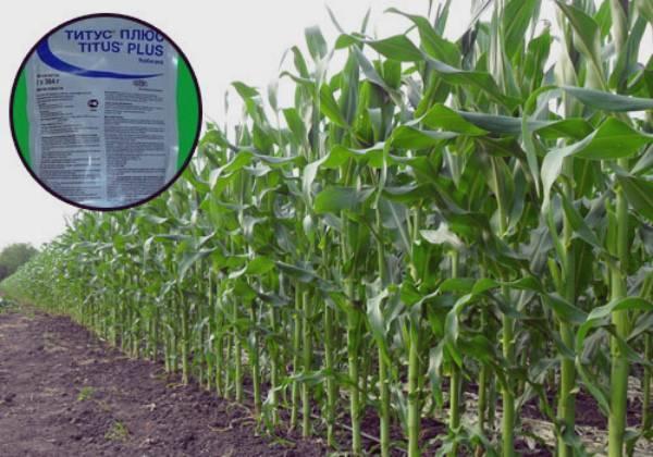 Применение гербицидов при выращивании кукурузы - общая информация - 2020