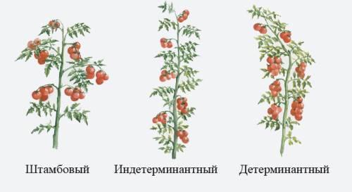 Как выращивать помидоры черри - южный огород