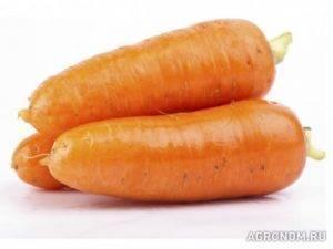 Описание сорта моркови абако