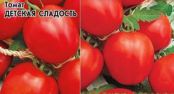 Томат московский деликатес: характеристика и описание сорта