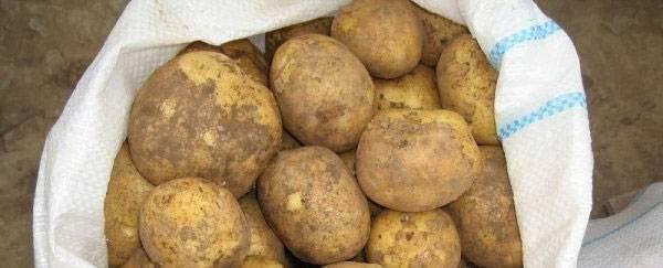 Характеристика и особенности выращивания картофеля винета