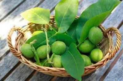 Лечение зелеными грецкими орехами в народной медицине: рецепты и отзывы