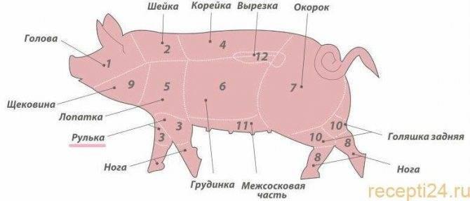 Кострец, вырезка, карбонат и почеревок свиньи на схеме: фото где находятся и что это такое