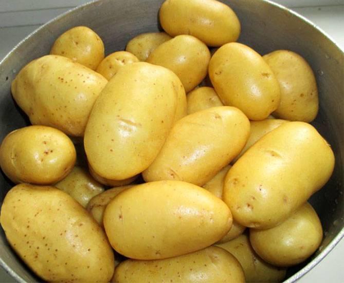Картофель адретта: описание и особенности выращивания культуры