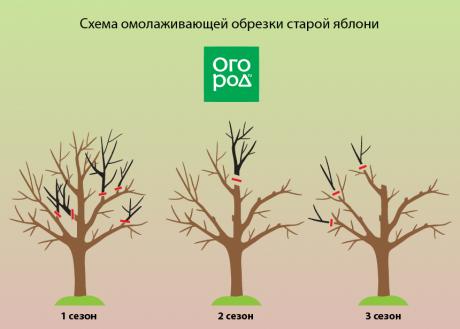 Правильная обрезка колоновидных яблонь. рекомендации профессиональных садоводов