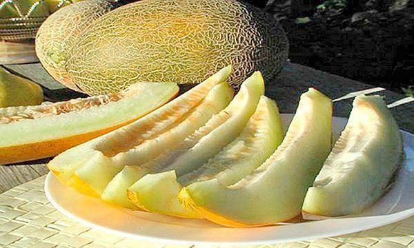 Дыня эфиопка как выбрать калорийность выращивание фото