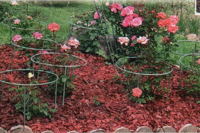 Пошаговые инструкции по изготовлению опор для плетистых роз и подвязке к ним растения. фото и советы по уходу