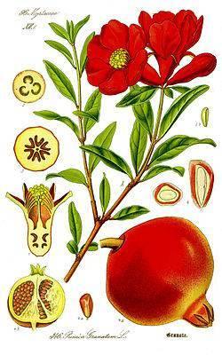 Турецкие фрукты по месяцам: когда что созревает