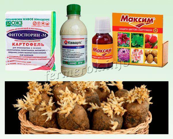 Фитоспорин – надежная защита и профилактика болезней картофеля