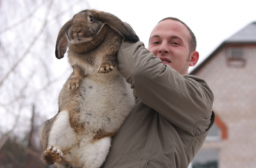 Описание кроликов породы ризен