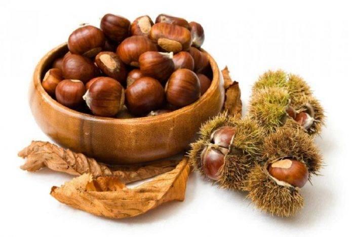 Как вырастить каштановое дерево из плода каштана