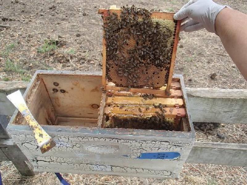 Пчелиный улей своими руками: чертежи, размеры, видео