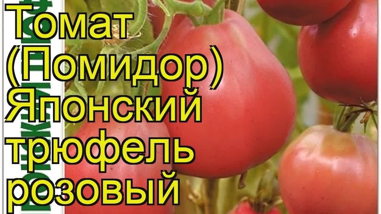 Томат японский трюфель оранжевый: описание сорта помидора и советы по выращиванию