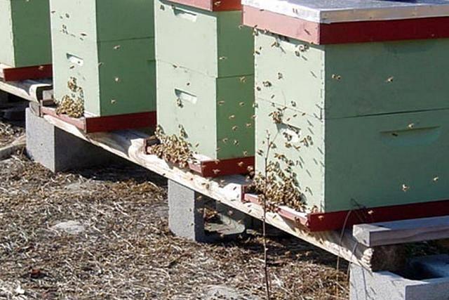 Многокорпусное содержание пчел: плюсы и минусы