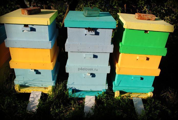 Объединение пчелосемей осенью.