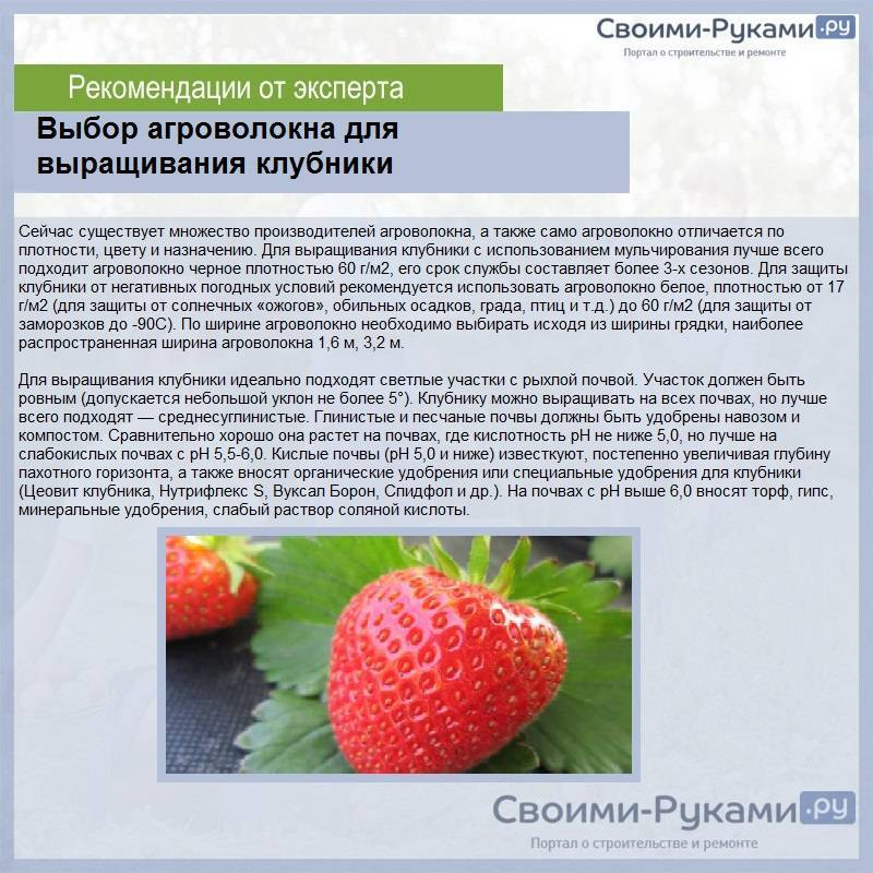 Выращивание клубники по финской технологии, способы и особенности