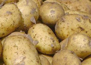 Картофель тулеевский: описание сорта, фото, отзывы