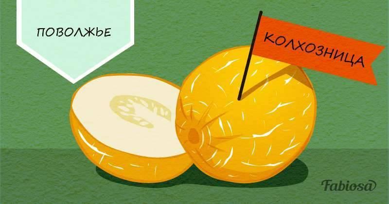 Как выбрать сладкую дыню — спелую торпеду или колхозницу