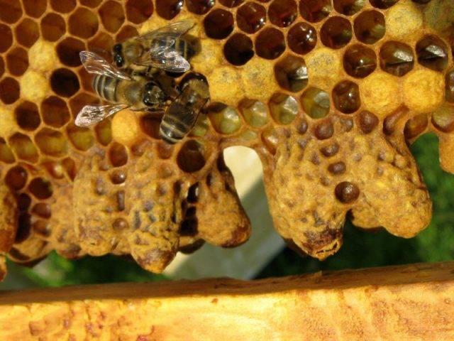 Делаем отводки пчел весной