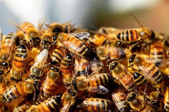 Лозеваль - инструкция по применению для птиц, пчел, кроликов