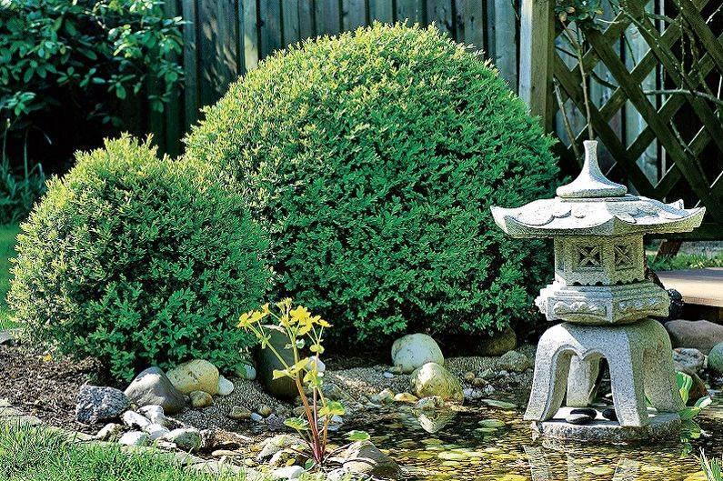 Самшит посадка и уход: полезные советы для садоводов