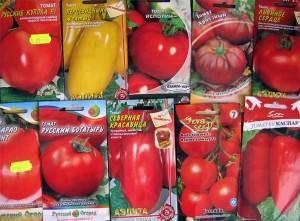 Как правильно прорастить семена помидоров на рассаду дома